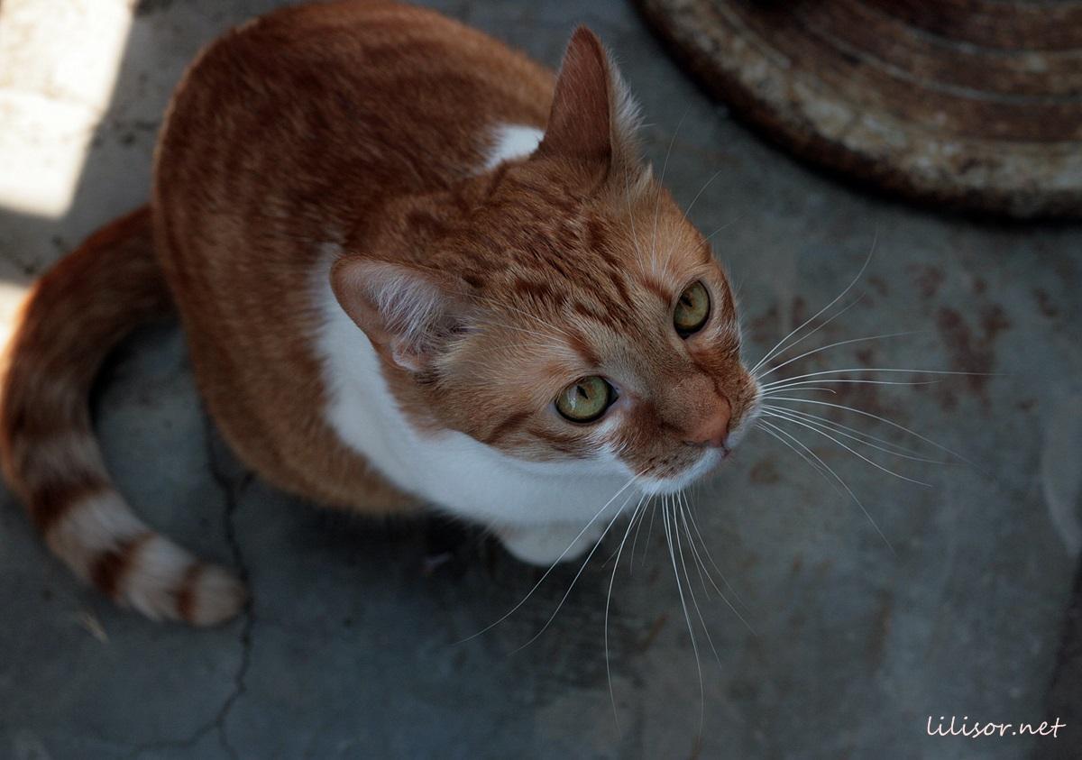bestie-paroasa-felina
