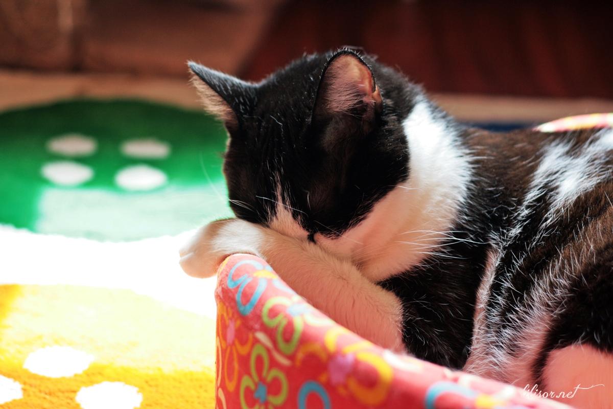 pisica-adormita