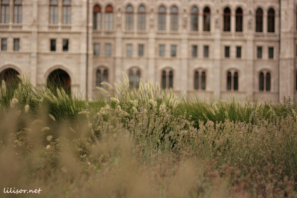 lavanda-parlament-budapesta