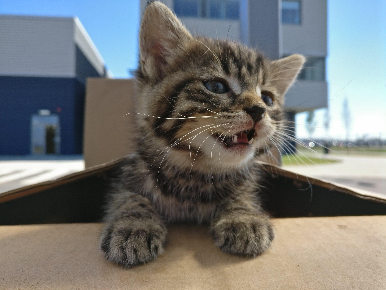Pui de pisica salvati