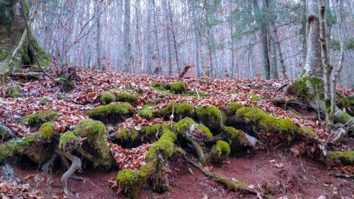Prin pădure Valea Boiului