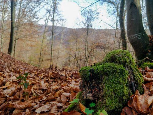 Valea Boiului noiembrie 2018