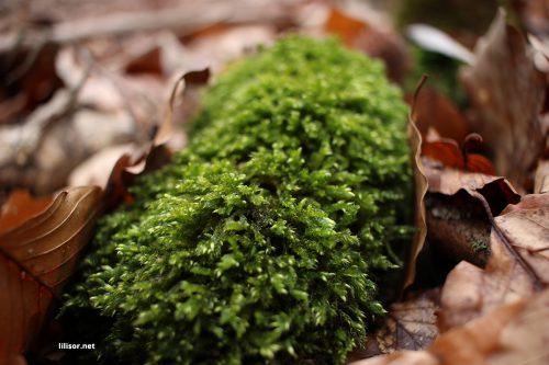 muschi-printre-frunze