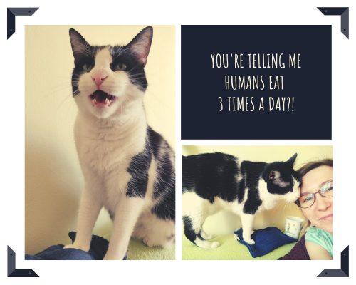 pisica-cerseste-mancare