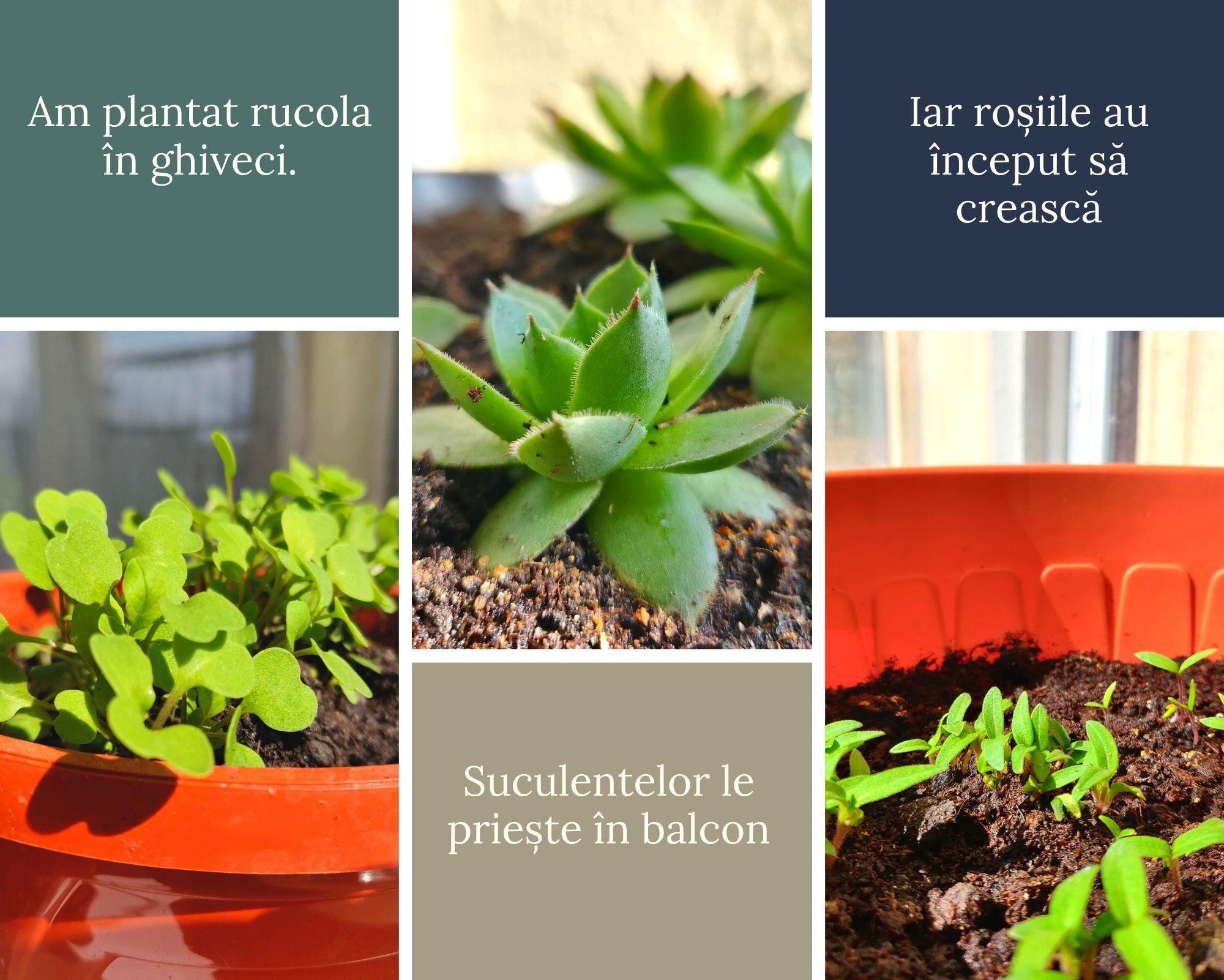 plante-in-ghiveci-in-balcon